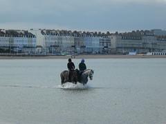 Horses in Weymouth Bay