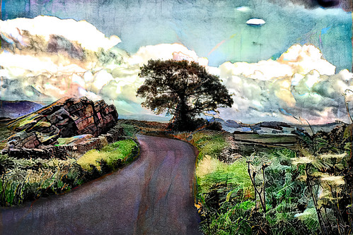 Country lane, 27th June, 2020