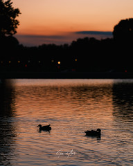 """""""The water was glassy and calm, still candy-colored in the afterglow of sunset."""" - Stephen King"""