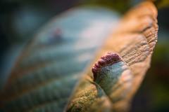 Close-up of a damaged leaf. Floral disease