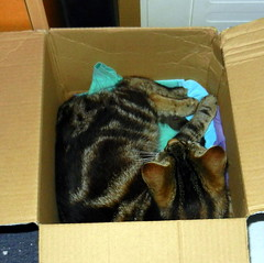 Charles relaxing in a cardboard box.