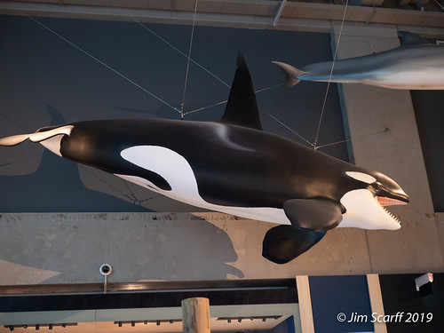 Orca display - I have not seen any in the wild in NZ, but they are frequently seen and studied here.