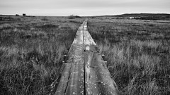 Boardwalk, Fogo Island 8447.jpg