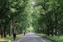 Hokkaido University - Fresh green.