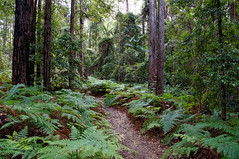 Rainforest in mount Mee