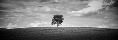 Lone Tree on the Hill