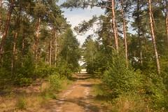 Weg in het bos (137FJAKA_3988)
