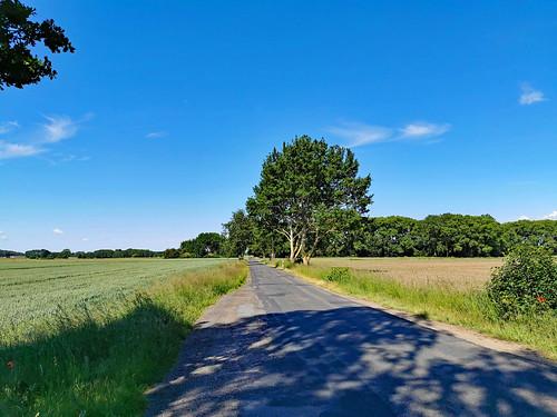 Insel Usedom - NSG Mellenthiner Os