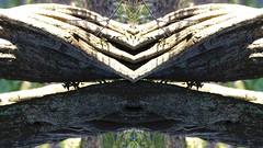 Kaleidographs