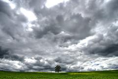 Zuckertütenbaum Niederwiesa