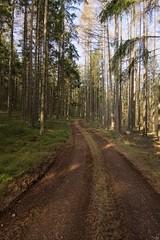 Road in Brdy