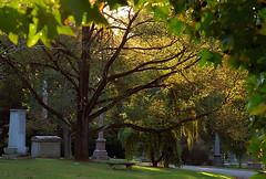 "Cincinnati - Spring Grove Cemetery & Arboretum ""Soft Morning Light"""