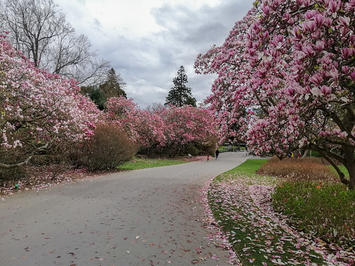 Pathway of Pink