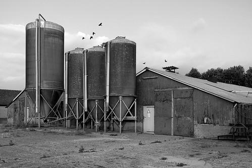 Old poultry farm