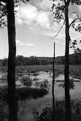 Oxford Swamp