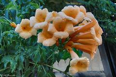 014468 - Flores