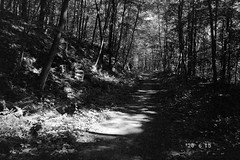 Larkin Bridle Trail