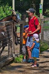 275 - Tierpark Haag - Ziegen