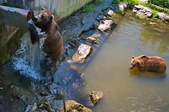 292 - Tierpark Haag - Braunbär