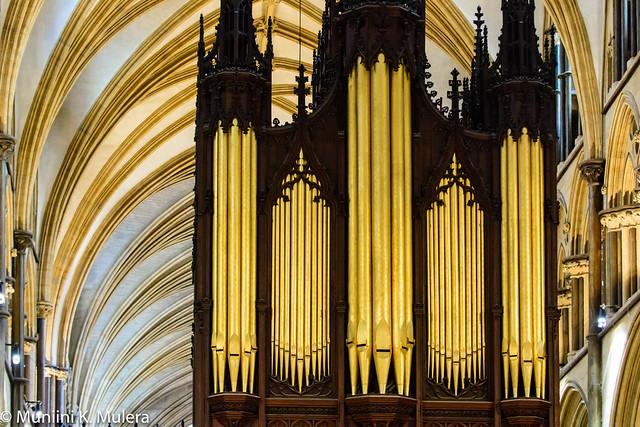 Organ close up