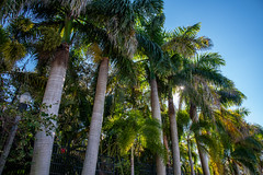 Sunken Gardens - St. Petersburg - Florida - 23 December 2018 - St. Petersburg - Florida - 23 December 2018