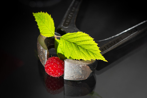 "An raspberry inbetween the tool - My entry for todays ""Crazy Tuesday"" theme ""Inbetween"""