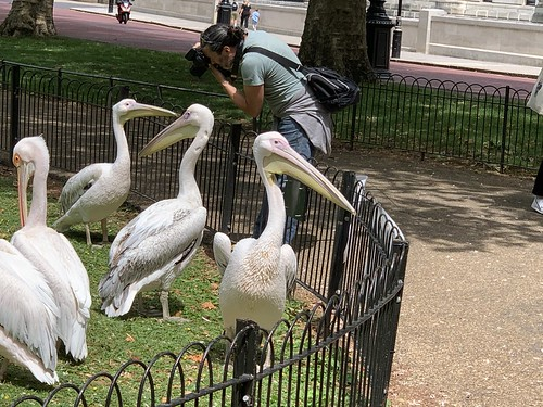 Lining up to be photographed in St James's Park, London