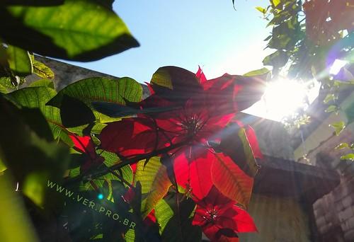 Sol nas plantas. 365 agradecimentos