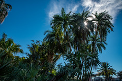 Gizella Kopsick Arboretum - St. Petersburg - Florida - 23 December 2018