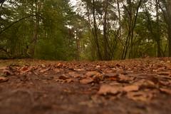Bladeren in het bos (137FJAKA_4023)