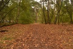 Bladeren in het bos (137FJAKA_4020)