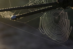 Webs and Cable