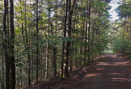 Un beau chemin ombragé