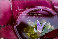 Rumi Observe the wonders as they occur around you. Don't claim them. Feel the artistry moving through and be silent