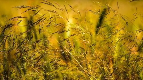 Warm breath of the fields