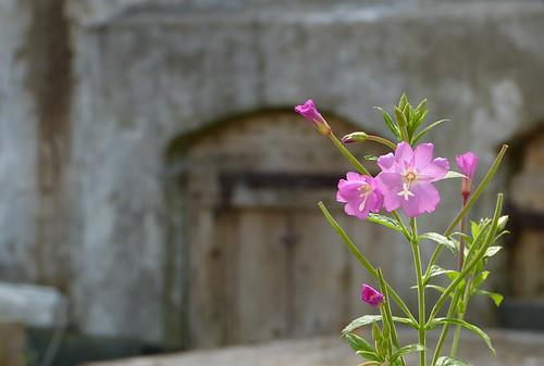 Pink flower enjoying the sunshine
