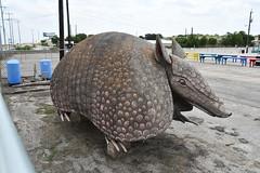 Giant Armadillo, Schertz, TX