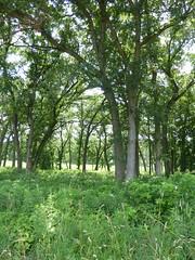 St. James Farm Forest Preserve 2020