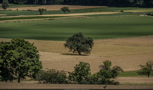 Fruit trees and fields at the foot of the Hohe Wand.