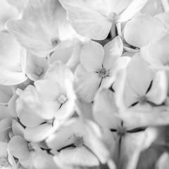 Four Petals