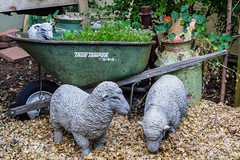 3 Rustic Sheep