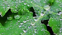 03186_waterdroplets_3840x2160