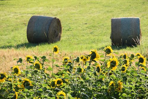 L'été à la campagne