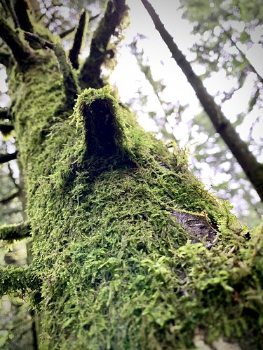 Wood & Moss naturestyle ;-)
