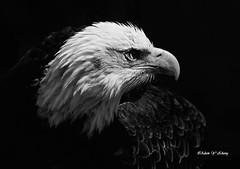 Amazing Wildlife Gallery 19