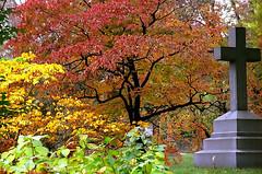 "Cincinnati - Spring Grove Cemetery & Arboretum ""Cross Inside Autumn"""