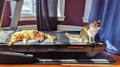 Oliver & Ulysses