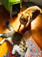 Ulysses & Oliver