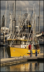 Yellow Trawler at dock Scarborough Marina-1=