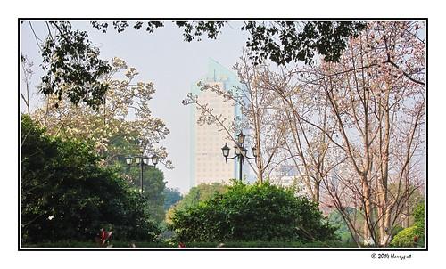 city park, ningbo